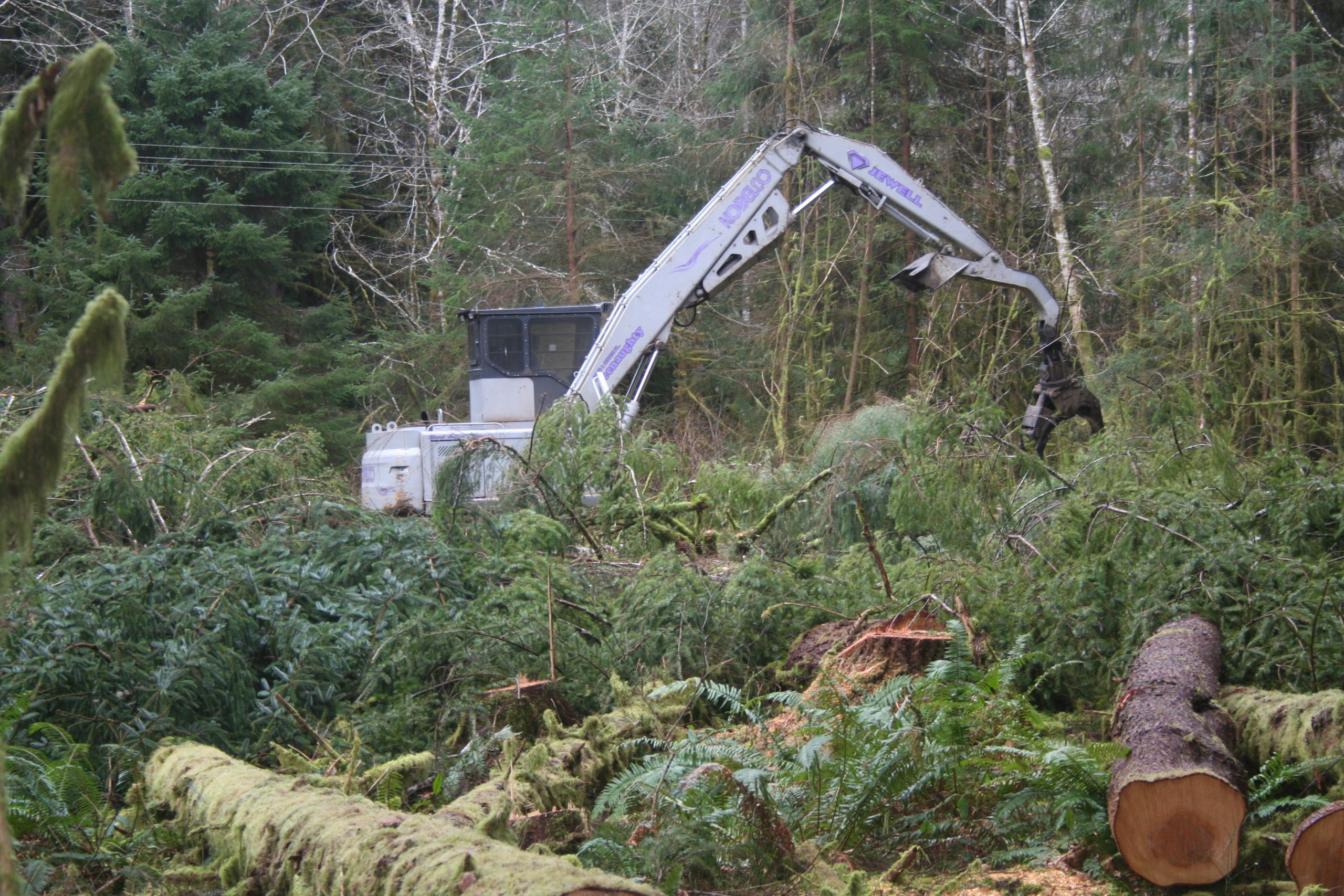Logging and Land Clearing